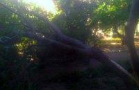 В Покрове 7-метровое аварийное дерево рухнуло на проезжую часть
