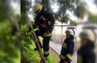 Котёнок двое суток не мог спуститься с дерева: в Днепре спасатели пришли на помощь