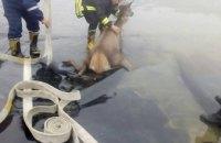В Львовской области самка оленя упала в бассейн без воды (ФОТО)