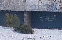 В Днепре появились елки-«самоубийцы» (ФОТО)