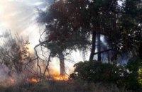 В Петриковском районе произошел масштабный лесной пожар
