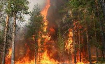 На Днепропетровщине горел хвойный лес
