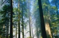 В Днепропетровской области задержали злоумышленников, которые вырубили лес почти на 300 тыс грн