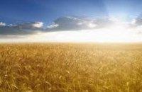 В Днепропетровске начали собирать урожай зерновых