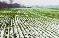 Резкие перепады температур и влажный грунт привели к разрывам корневой системы: каким будет урожай на Днепропетровщине
