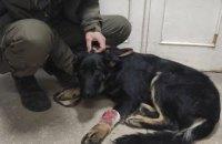 В Днепре спасли собаку, попавшую в ДТП