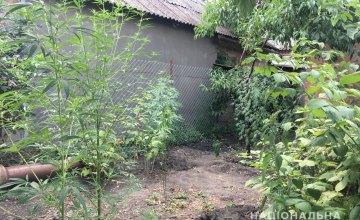 В Кривом Роге женщина посадила у себя в огороде более 20 кустов конопли