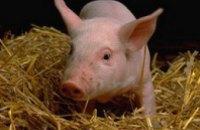 Украина запретила ввоз свинины из Норвегии