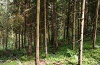 На Днепропетровщине в лесу нашли женщину с маленьким ребенком