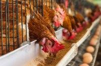 Уникальный продукт, не имеющий аналогов: днепровский завод изобрел замену соевым ГМО-кормам для животных