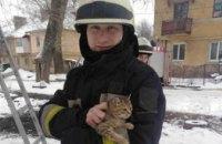 В Днепре спасли кота, который два дня просидел на дереве (ВИДЕО)