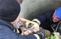 В Днепре на ж/м Тополь спасли собаку (ФОТО)