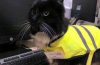 В Великобритании кот официально получил должность контроллера вокзала