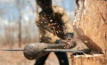 На Днепропетровщине группа «черных лесорубов» нанесла ущерб более чем на 50 тысяч гривен