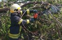 В Новомосковске упавшее 15-метровое дерево перекрыло движение транспорта (ФОТО)