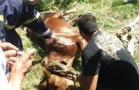 На Днепропетровщине сотрудники ГСЧС  спасли двух лошадей (ФОТО)