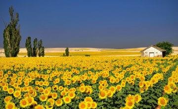 Погода в Днепре 10 августа: солнечная погода и без осадков