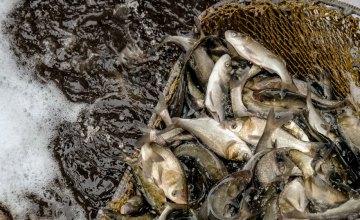 Во время нереста на Днепропетровщине задержали почти 1,3 тыс браконьеров