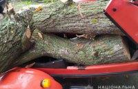 На Днепропетровщине пьяный  мотоциклист перевозил спиленные дубы