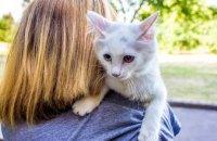 Застрял на 5-метровом дереве: в Вольногорске пожарные спасли домашнего кота
