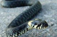 В Днепропетровской области в школьную столовую заползла змея