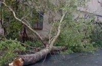 В 5 районах Днепропетровска ветер повалил деревья