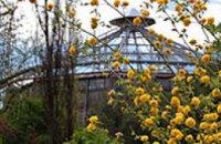 В Днепропетровском ботаническом саду проходит капитальный ремонт оранжереи