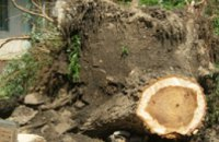 В Днепропетровске сильный ветер повалил более 200 деревьев