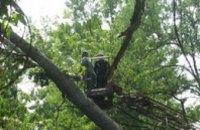 В Индустриальном районе Днепропетровска ураганный ветер повалил деревья и нарушил наружное освещение