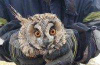 На Днепропетровщине пожарные при ликвидации возгорания на поле спасли совенка