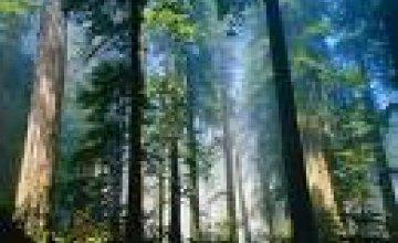 В Днепропетровской области увеличится площадь лесов