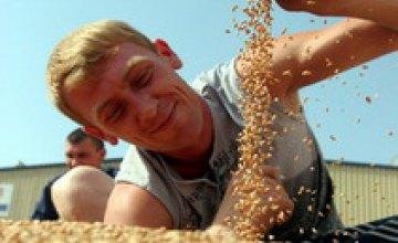 Аграрии Днепропетровской области испытывают проблемы с реализацией зерна