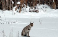 На территории зоны отчуждения учеными были обнаружены новые животные (ФОТО)