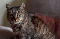 В Британии умер самый старый кот планеты
