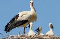 Энергетики ДТЭК Днепрооблнерго установили более 70 искусственных опор для гнездования аистов