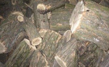 На Днепропетровщине поймали «черных» лесорубов
