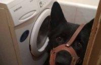 Во Львове женщина натравила собаку на прибывших по ее вызову полицейских  (ФОТО)
