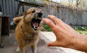 В Харьковской области собака загрызла 4-летнего мальчика