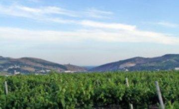 Севастопольский регион может войти в перечень винодельческих зон мира