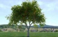 «Утро с Интером»: как деревья спасают от наводнений и оползней?