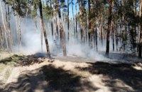 В Павлоградском лесничестве случился пожар (ФОТО)