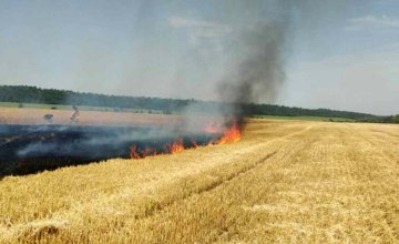 На Днепропетровщине сгорело 2.5 га озимой пшеницы