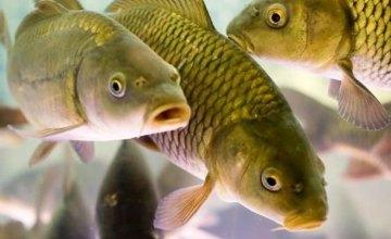 Из-за аномально теплой зимы рыбное хозяйство Днепропетровщины может понести сотни тонн убытков