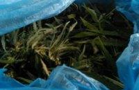 В Днепре полиция изъяла у мужчины партию марихуаны на 60 тыс грн