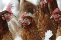 Украина запретила импорт птицы из Болгарии и Венгрии