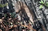 На Днепропетровщине во время поиска металлолома мужчина наткнулся на мину