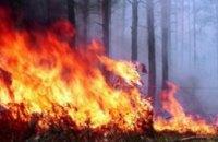 На Днепропетровщине огонь полностью уничтожил почти 150 га леса