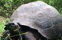Ученые открыли новый вид гигантских черепах
