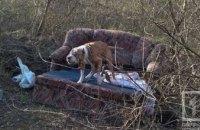 На Днепропетровщине в лесополосе хозяин оставил собаку на четыре дня без еды и воды (ФОТО, ВИДЕО)