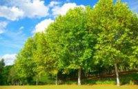 Ученые подсчитали количество деревьев на планете